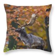 110221p137 Throw Pillow