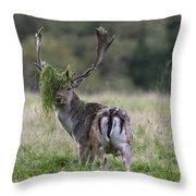 110221p138 Throw Pillow