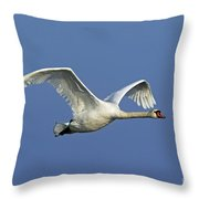 110307p064 Throw Pillow