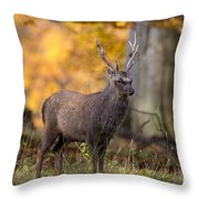 110307p069 Throw Pillow