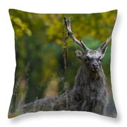 110307p070 Throw Pillow