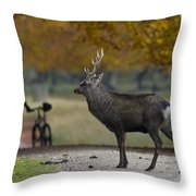 110307p071 Throw Pillow