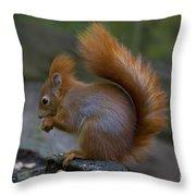 110307p078 Throw Pillow
