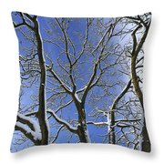 110414p088 Throw Pillow