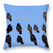 110506p063 Throw Pillow