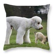 110506p119 Throw Pillow