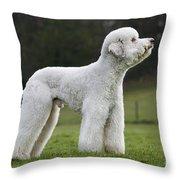 110506p121 Throw Pillow