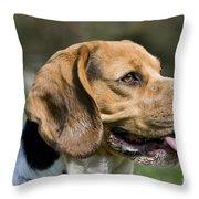 110506p141 Throw Pillow
