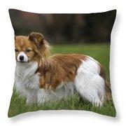 110506p148 Throw Pillow