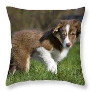 110506p161 Throw Pillow
