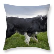 110506p164 Throw Pillow