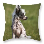 110506p176 Throw Pillow