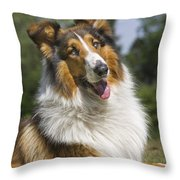 110506p178 Throw Pillow