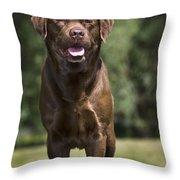 110506p183 Throw Pillow
