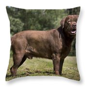 110506p184 Throw Pillow