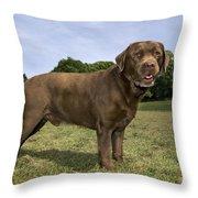 110506p186 Throw Pillow