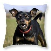 110506p188 Throw Pillow