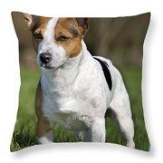 110506p195 Throw Pillow