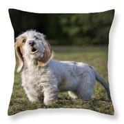 110506p207 Throw Pillow