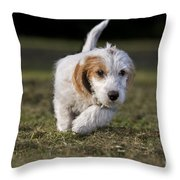 110506p208 Throw Pillow