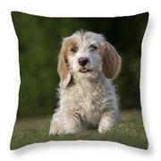 110506p211 Throw Pillow