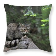 110613p008 Throw Pillow