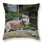 110613p022 Throw Pillow