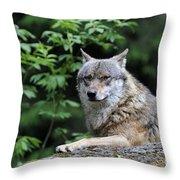 110613p025 Throw Pillow