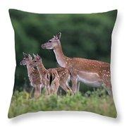 110613p158 Throw Pillow