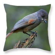 110613p214 Throw Pillow