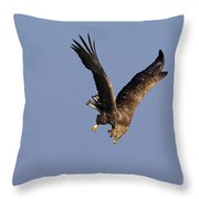 110613p223 Throw Pillow