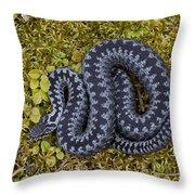 110714p095 Throw Pillow