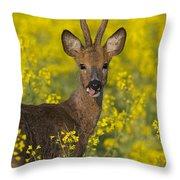 110714p140 Throw Pillow