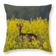 110714p143 Throw Pillow
