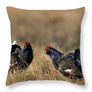 110714p175 Throw Pillow