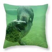 110714p237 Throw Pillow