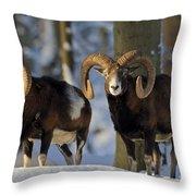 110714p266 Throw Pillow
