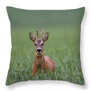 110714p319 Throw Pillow