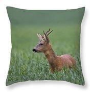110714p320 Throw Pillow