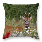 110714p324 Throw Pillow