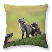 111130p056 Throw Pillow
