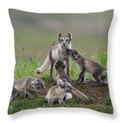 111130p059 Throw Pillow