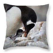 111130p146 Throw Pillow