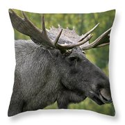 111216p113 Throw Pillow