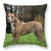 111216p248 Throw Pillow