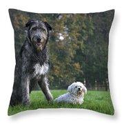 111216p250 Throw Pillow
