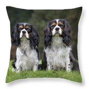 111216p253 Throw Pillow