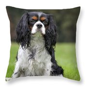 111216p255 Throw Pillow