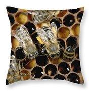 Honey Bees On Honeycomb Throw Pillow