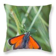 12 Balkan Copper Butterfly Throw Pillow